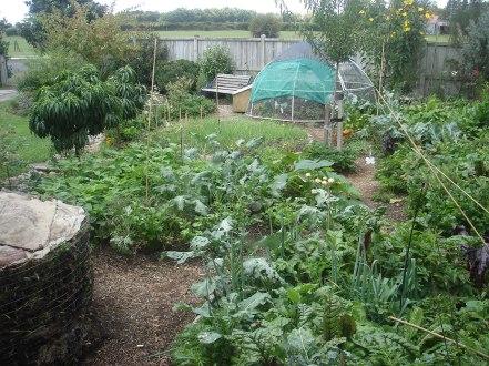front Garden march 2013 001