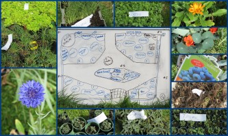 The plan for blitz #16 as well as some of the seedlings that were grown for the food forest!